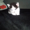 Котёнок,ищу дом.Пинск в Пинске