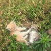 Отдам котят 1 месяц в добрые руки в Пинске