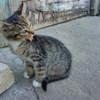 котята бесплатно в Пинске