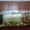 Продам аквариум с рыбками в Пинске