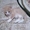 Котенок бесплатно в Пинске
