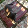Красивый щенок ждёт своего хозяина в Пинске