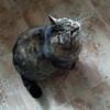 Кошка добрая стерилизованная  ласковая в Пинске