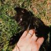 Отдадим трёх  котят в добрые руки (2 месяца) в Пинске