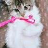 Котёнок модели Classik с дизайнерским тюнингом ищет самых заботливых хозяев в Пинске