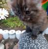 Котята в добрые руки! в Пинске