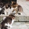 Котята даром 2 мальчика и 2 девочки (2 месяца) в Пинске