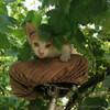 Рыжие котята-мышеловы в Пинске