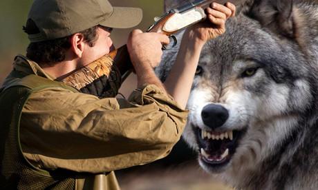 Любителям охоты — о сроках разрешений и запретов в мае